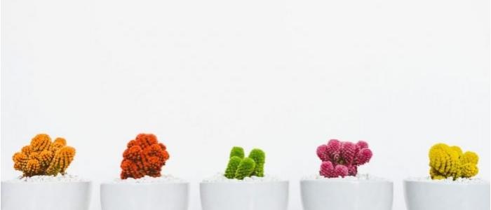 kaktusai grazus